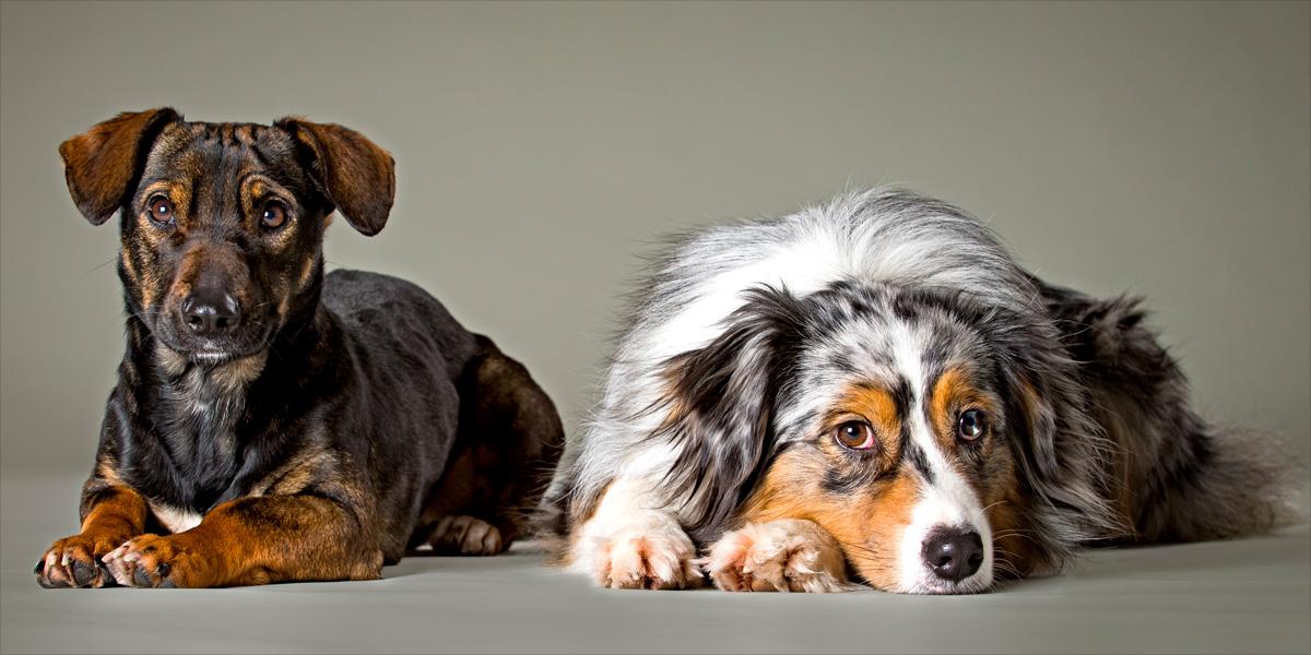 Hundeshooting Fotostudio Kästner Werne 32