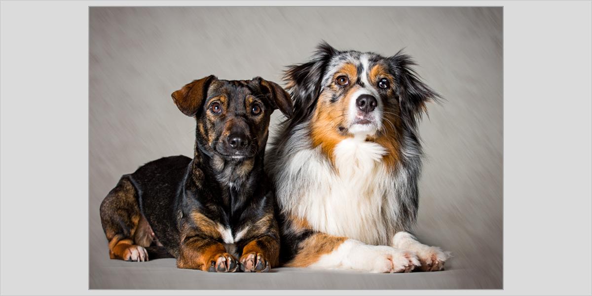 Hundeshooting Fotostudio Kästner Werne 33