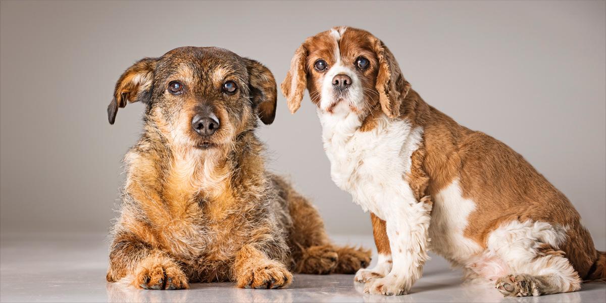 Hundeshooting Fotostudio Kästner Werne 35