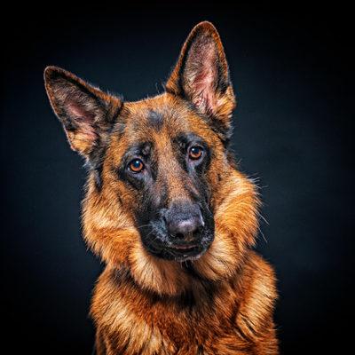 Hundefotografie Fotostudio Kästner Werne 70